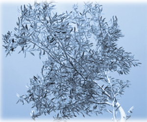 Creative Work theme: digital image of an olive tree against light blue background.